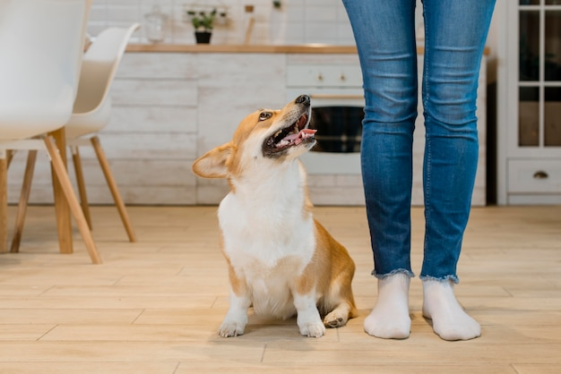 Vue frontale, de, chien, séance, côté, et, regarder, propriétaire