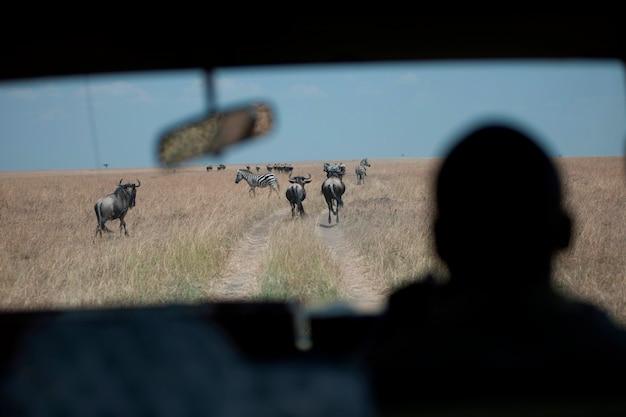 Vue des gnous depuis la vitre de la voiture