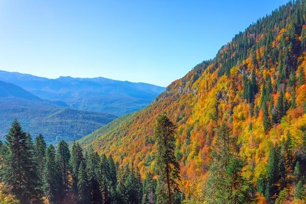 Vue sur une gorge de montagne avec une forêt dense, des épinettes, des chênes et d'autres arbres aux couleurs d'automne.