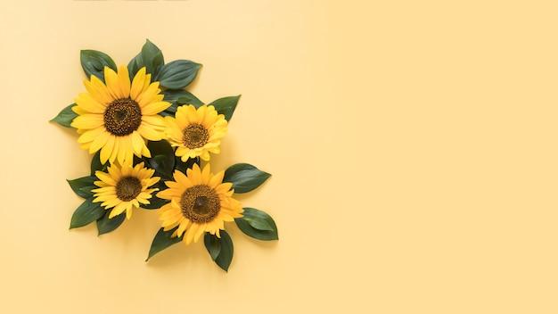 Vue grand angle de beaux tournesols sur une surface jaune