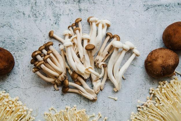 Vue grand angle de champignons sur le sol