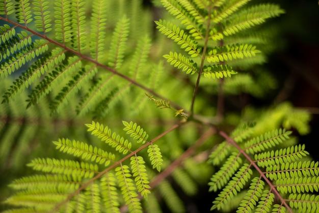 Vue grand angle des feuilles de fougère d'autruche dans un jardin sous la lumière du soleil