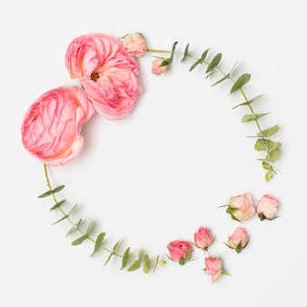 Vue grand angle de fleurs de pivoine et boutons de roses avec des feuilles d'eucalyptus