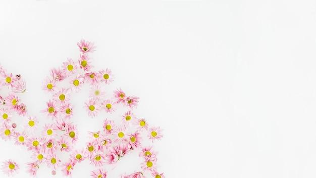 Vue grand angle de fleurs roses sur fond blanc
