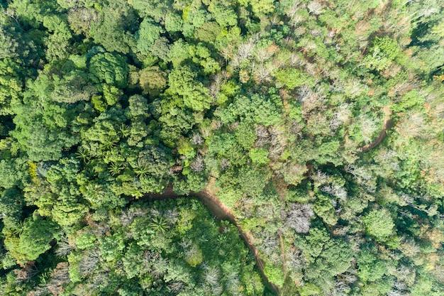 Vue grand angle de l'image de la forêt tropicale humide par drone shot