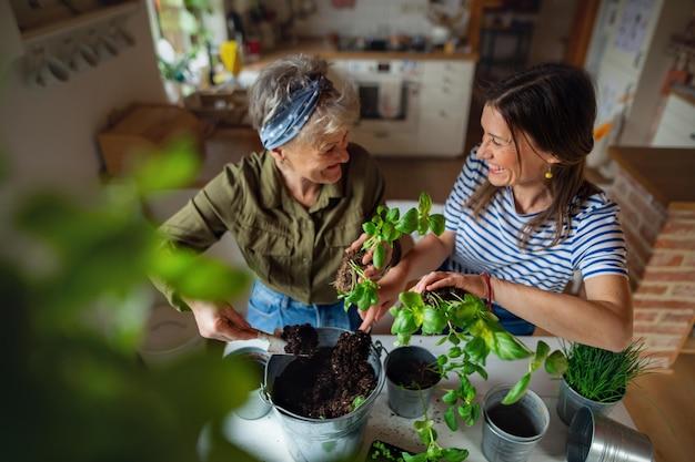 Une vue en grand angle d'une mère âgée heureuse avec une fille adulte à l'intérieur à la maison, plantant des herbes.