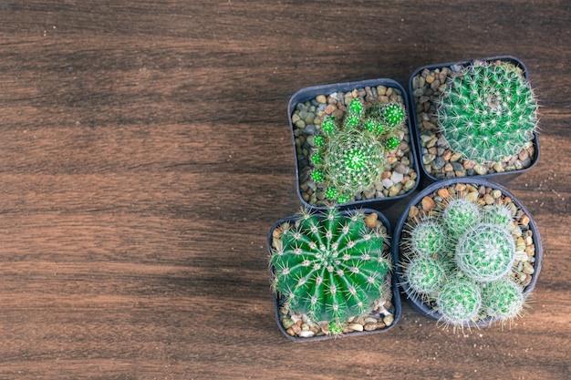 Vue grand angle de nombreuses espèces de cactus reposent sur l'ancienne table en bois