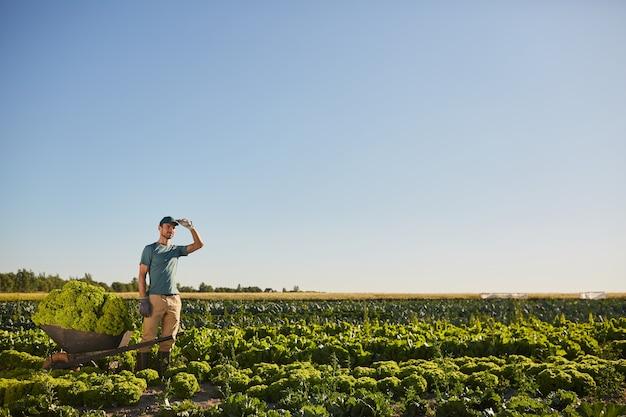 Vue grand angle à un travailleur masculin tenant un chariot chargé et regardant ailleurs en se tenant debout à la plantation de légumes à l'extérieur contre le ciel bleu, copiez l'espace