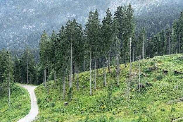 Vue de grands épinettes dans la forêt sur fond de montagnes.