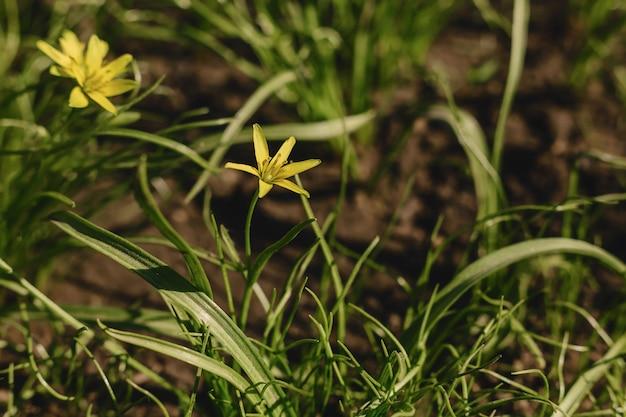 Vue de gros plan de fleurs de printemps