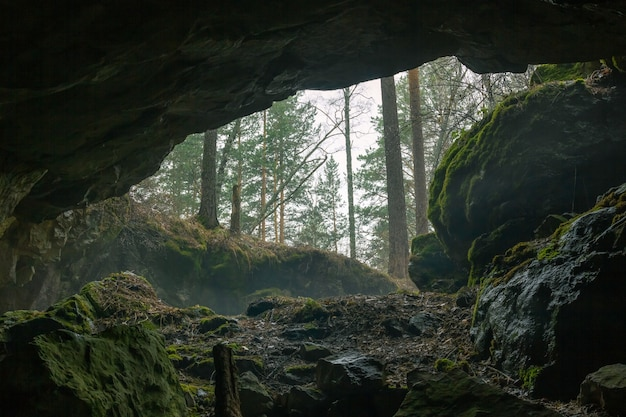 Vue de la grotte à la forêt brumeuse