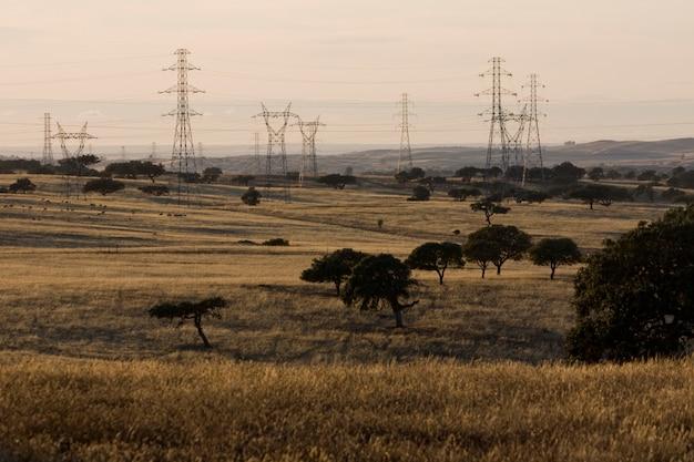 Vue d'un groupe de tours électriques sur un champ de chêne vert.