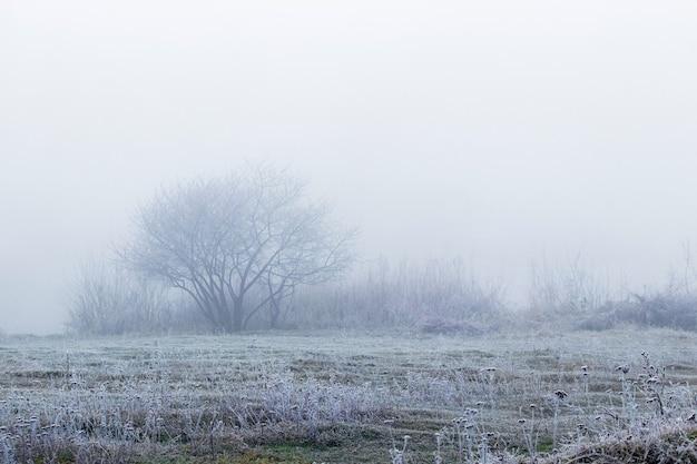 Vue d'hiver avec arbres et arbustes couverts de givre dans la brume matinale