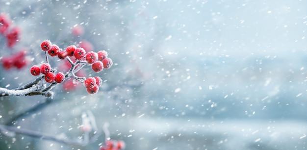 Vue d'hiver avec des baies de sorbier rouge pendant les chutes de neige