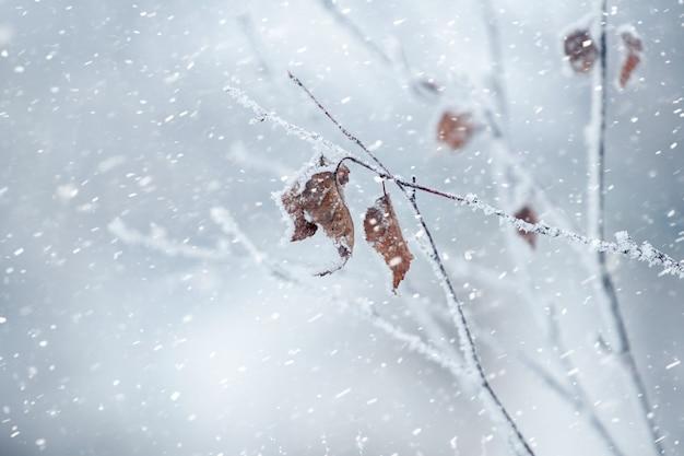 Vue d'hiver avec des feuilles sèches sur une branche d'arbre lors d'une chute de neige. fond de noël d'hiver