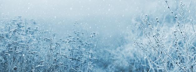 Vue d'hiver avec des fourrés d'herbe sèche lors d'une chute de neige, panorama. fond d'hiver