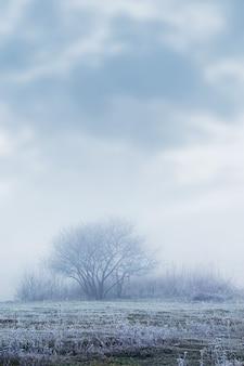 Vue d'hiver avec de l'herbe couverte de givre et des arbres dans la brume matinale