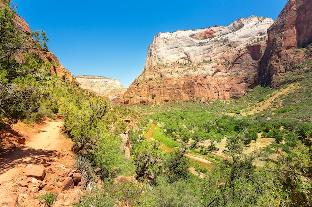 Vue imprenable sur le canyon du parc national de zion