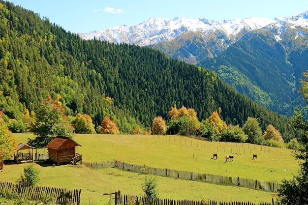 Vue imprenable sur la ferme de montagne avec groupe de chevaux dans un pré