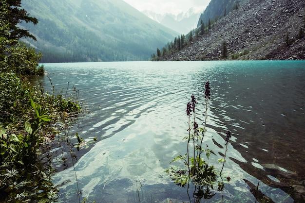 Vue imprenable sur les ondulations méditatives sur l'eau calme et claire azur du lac de montagne.
