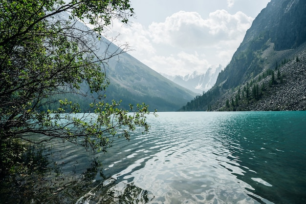 Vue imprenable à travers les arbres sur les montagnes enneigées et les ondulations méditatives sur l'eau claire et calme azur