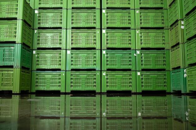 Vue intérieure de l'entrepôt frigorifique avec de nombreuses caisses pleines de pommes biologiques prêtes à être distribuées.