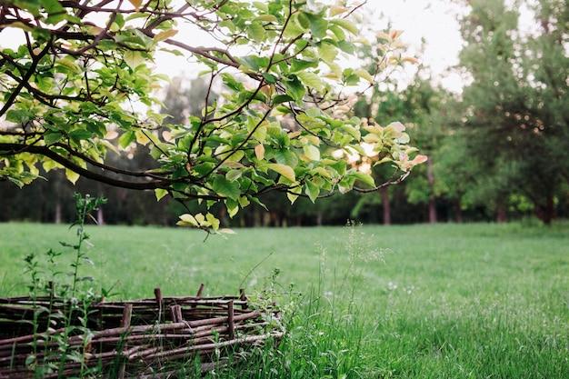 Vue sur le jardin avec de l'herbe verte, des arbres et une clôture en bois