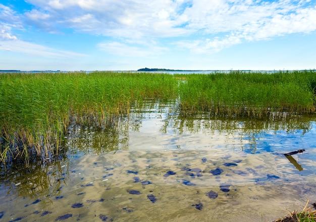 Vue sur le lac en été avec quelques plantes à la surface de l'eau