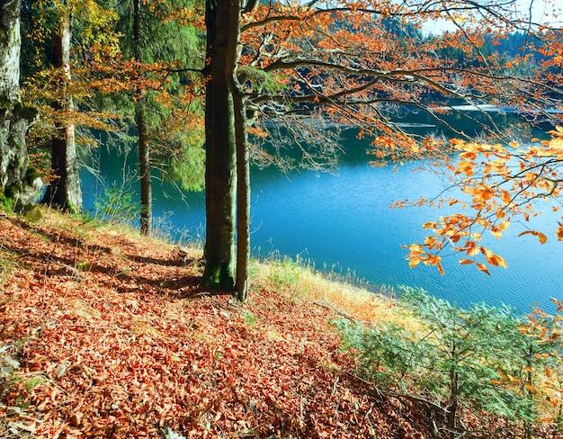 Vue sur le lac de montagne synevir à travers les brindilles d'arbres d'automne