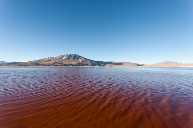 Vue de la laguna colorada, bolivie
