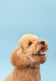 Vue latérale du chien mignon domestique