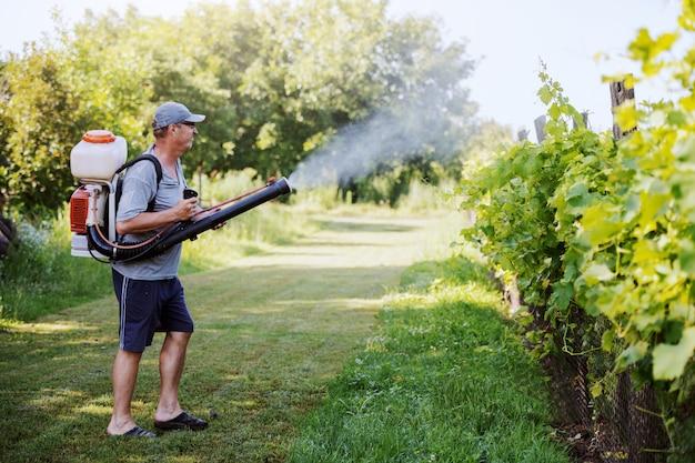 Vue latérale du paysan mature du caucase en vêtements de travail, chapeau et avec une machine de pulvérisation de pesticides moderne sur le dos, pulvérisant des insectes dans le vignoble.