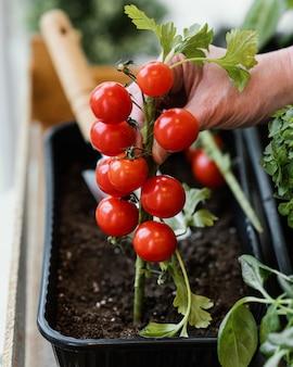 Vue latérale d'une femme plantant des tomates dans le sol