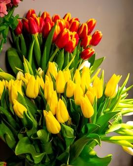 Vue latérale d'une fleur de tulipe jaune et rouge sur fond gris