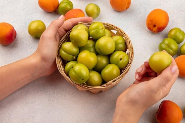 Vue latérale des mains féminines tenant panier de prunes vertes et prune entière avec motif d'abricots et de prunes sur fond blanc