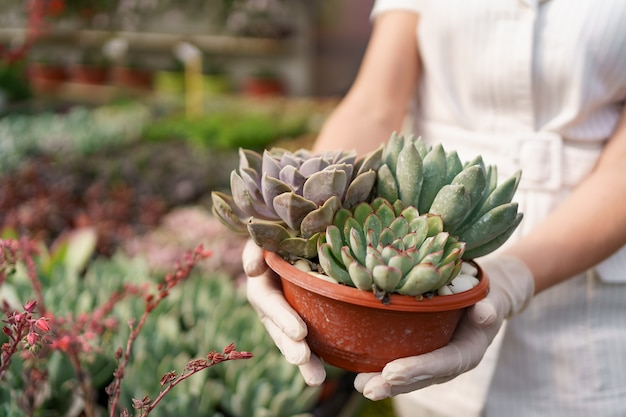 Vue latérale des mains de femme portant des gants en caoutchouc et des vêtements blancs tenant des plantes succulentes ou des cactus en pots avec d'autres plantes vertes
