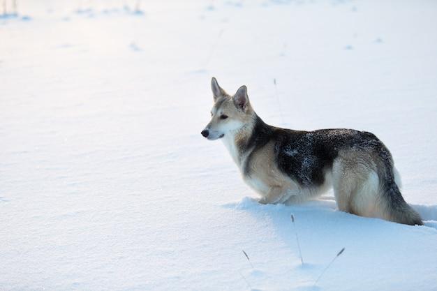 Vue latérale sur le mignon chien bâtard debout dans une congère