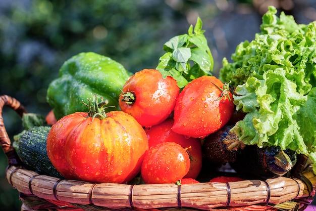 Vue de légumes humides sur table dans le jardin