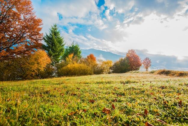 Vue sur le lever du soleil de la forêt de montagne avec un ciel nuageux dramatique sur fond