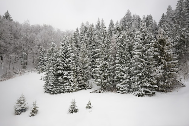 Vue magnifique sur une colline enneigée avec sapins et neige sur fond de ciel nuageux gris