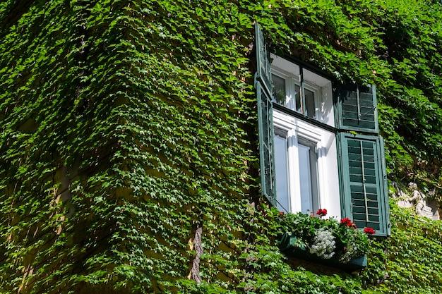 Vue de la maison qui est recouverte de raisins sauvages.