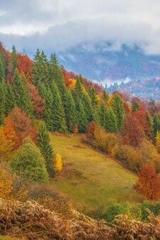 Vue sur la majestueuse forêt de montagne