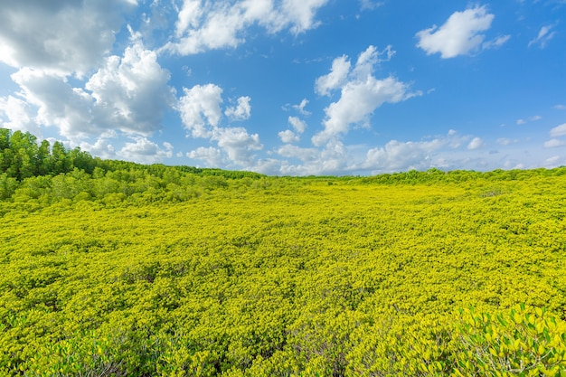 Vue sur la mangrove et le ciel
