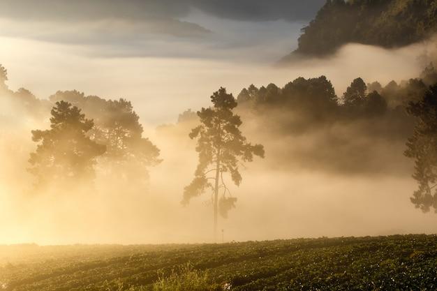 Vue, de, matin, brume, à, doi, angkhang, montagne, chiang mai, thaïlande