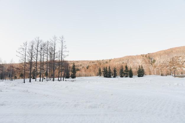 Vue sur la montagne en hiver avec une couverture de neige blanche à toutes les zones bordée de pins