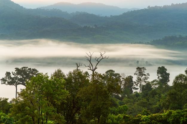 Vue sur la montagne et la magnifique brume du parc national de phu langka, thaïlande