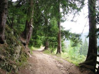 Vue de la montagne rhodope central, de la saleté