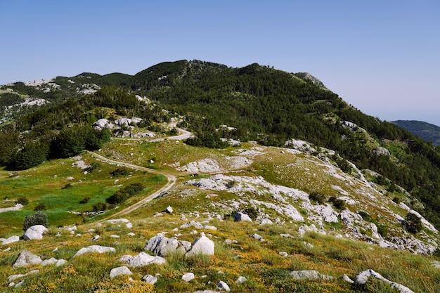 Vue sur les montagnes couvertes d'herbe forestière et de pierres