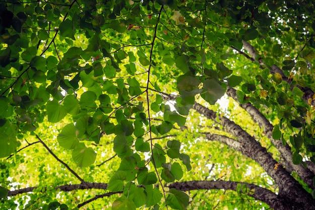 Vue nadir des arbres avec leurs branches pleines de feuilles vertes laissant entrer quelques rayons de soleil