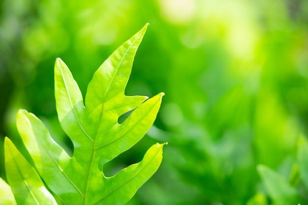 Vue de nature agrandi de feuille verte sur fond de verdure floue avec espace de copie